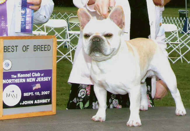 BEST OF BREED WIN